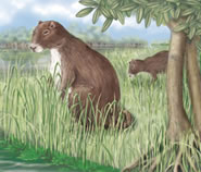 The Phoberomys Pattersoni is the ancient ancestor of the Caviar Pocellus.