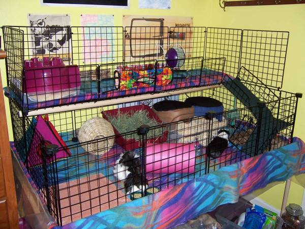 Amazing guinea pig cages guinea pig hub for Guinea pig cages for two