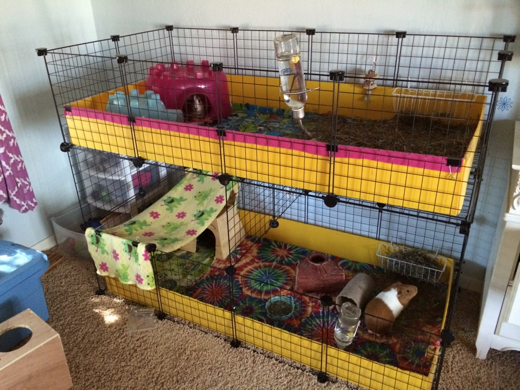 Large rabbit hutch and run large rabbit run large rabbit for Small guinea pig cages for sale