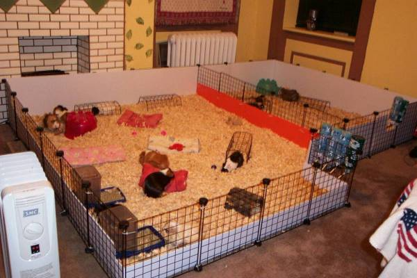 Amazing guinea pig cages guinea pig hub for Coroplast guinea pig cage for sale