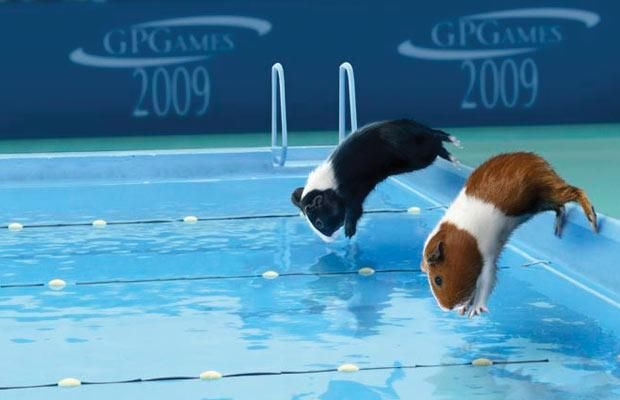 Funny guinea pig pictures guinea pig hub 2009 guinea pig games publicscrutiny Image collections
